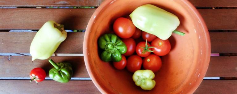 Beitragsbild_2000x800_Paprika-Tomaten