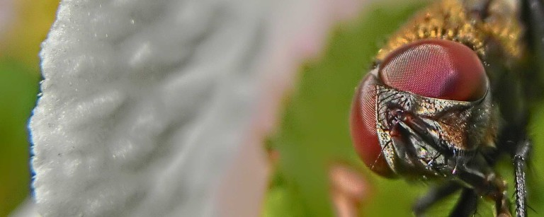 Fliege 7